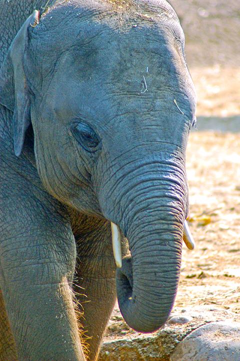 Photo of baby elephant